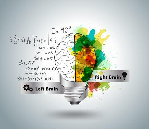 dreamstime_brain evolves