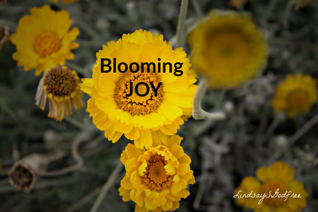 bloom of Joy