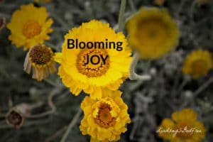 bloom of Joy